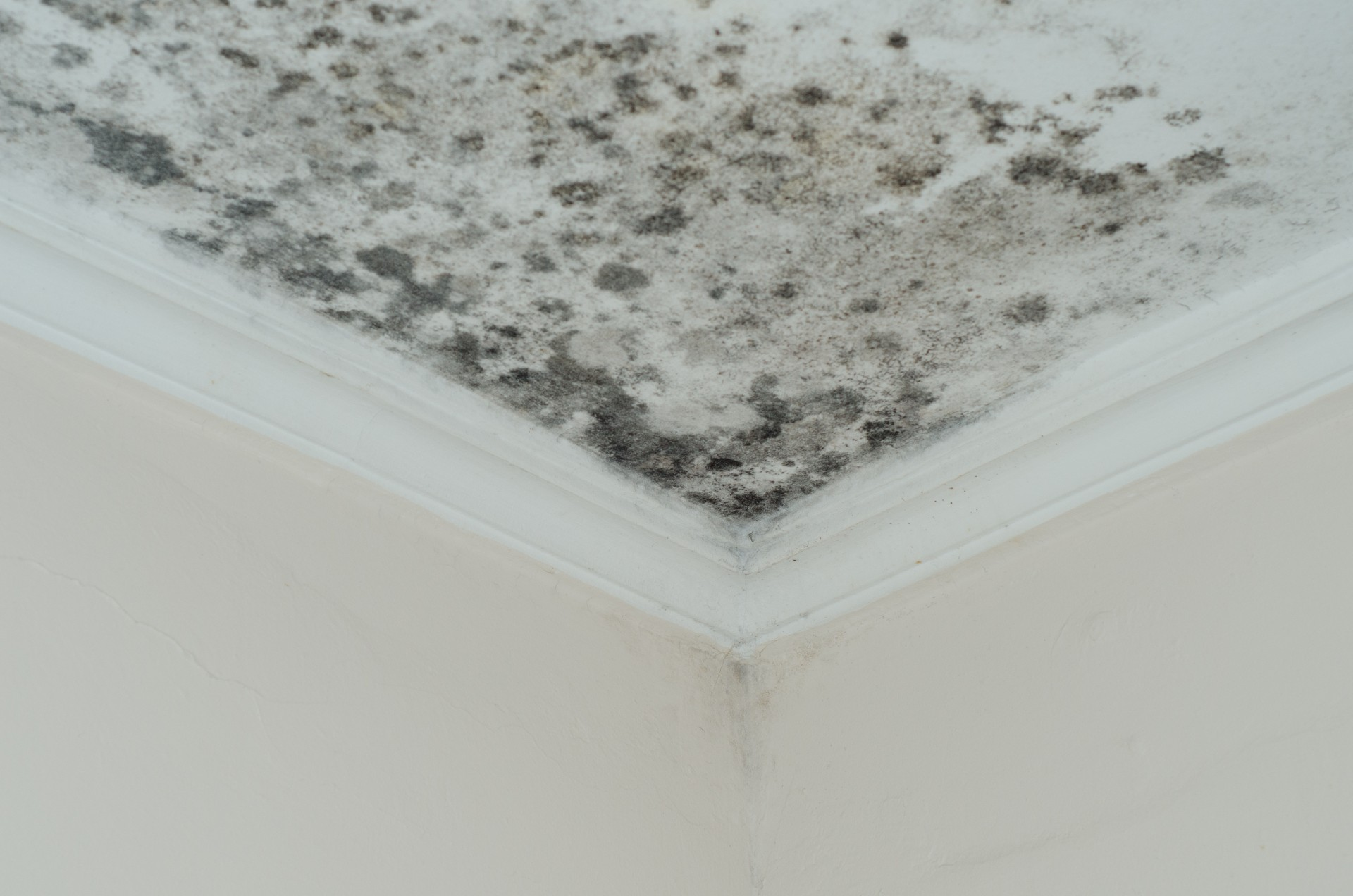 moldy ceiling inside water damage